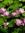 tori flores