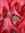 PastAllReason's icon