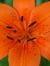 Fleurdelilley