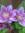 Brenda (gardengal) | 16 comments