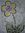 Kiwiflora