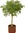 The Ficus   72 comments