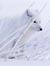 Arctic Firefox