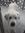 Macwolf01 [Elise] (macwolf01) | 1012 comments