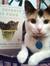 Callie The_Cat