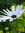 Celeste (celemack) | 104 comments