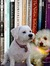 Two Bichons Book Group