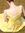Liesl's icon
