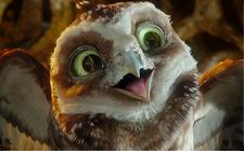 Dustin Crazy little brown owl