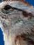 77sparrow77
