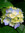 Hindley (hindlebug) | 29 comments