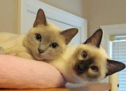 Lisa D - Sassy Cat Chat