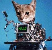 Robot Katt