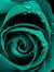 A. Rose