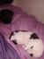 Desley (Cat fosterer)