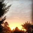 Rhubarb Sky