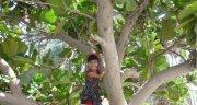 Nisha Sunil