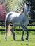 equestrian617
