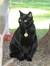 Kitty Catster