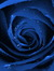 Rose Reeve
