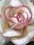 Anabella Rose