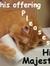 Patchcat