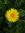 Tasia (Ocarina) | 139 comments