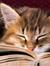 Kitty Kestrel
