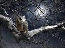 Moonlight Reader