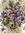Molten*Violet | 9 comments