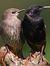 Lone Birdy