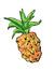 Pineapple Press
