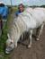 Hester Stasse