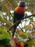 Josephine Bird