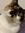 Catspjamas