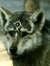 NAECad aka. WolfieN65
