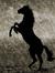 Dark Horse Poetry
