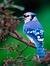 Wyvensforest