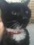 Jerome's Cat