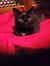 Alli & Purr's Black Cat Bookclub