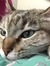 Catlover4life