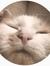 #kattenmolleläser