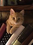 Dorie  - Cats&Books :)