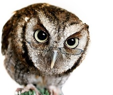 Barred Owl Books