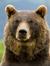 A_Bear