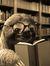 Susan - Read, Read, No Sleep, Repeat
